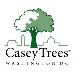 Casey Trees